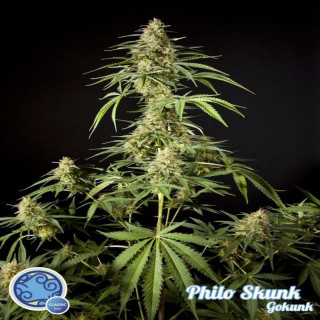 EVAP - Air Flower - 900ml