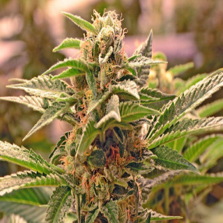 ONA Mist Apple Crumble - 170 g