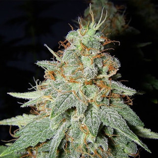 Water Tray 300x150cm