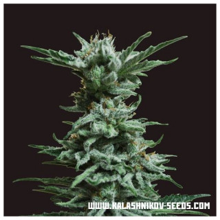 Solution d'étalonnage pH 4.01 Milwaukee - sachet 20 ml
