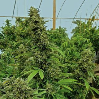 Granulés All in one pellet 1Kg - Aptus