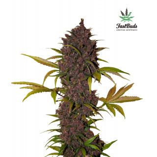 NeemAzal 250ml