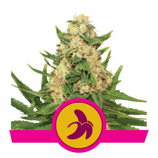Kit irrigation 6 plantes - SIROFLEX