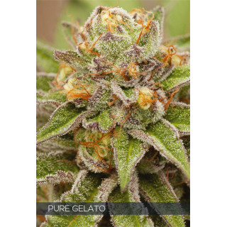 Calcium foliaire Vitalink - 250 ml
