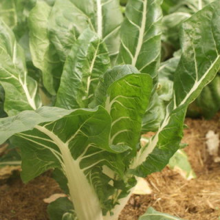 Gaine Phonic Trap Ø 254 mm - 3 mètres