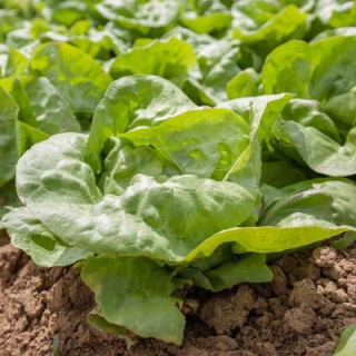 Bio grow 250 ml biobizz