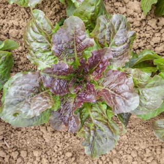 Bio grow 500 ml biobizz