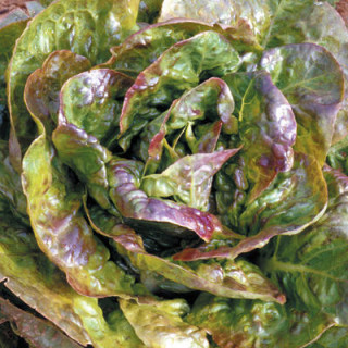BIO BLOOM Biobizz - 250 ml