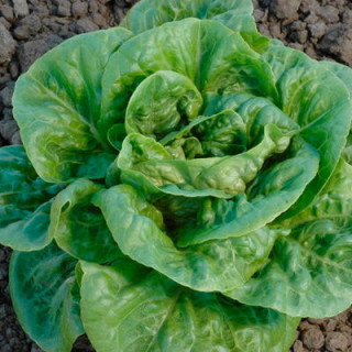 BIO BLOOM Biobizz - 500 ml