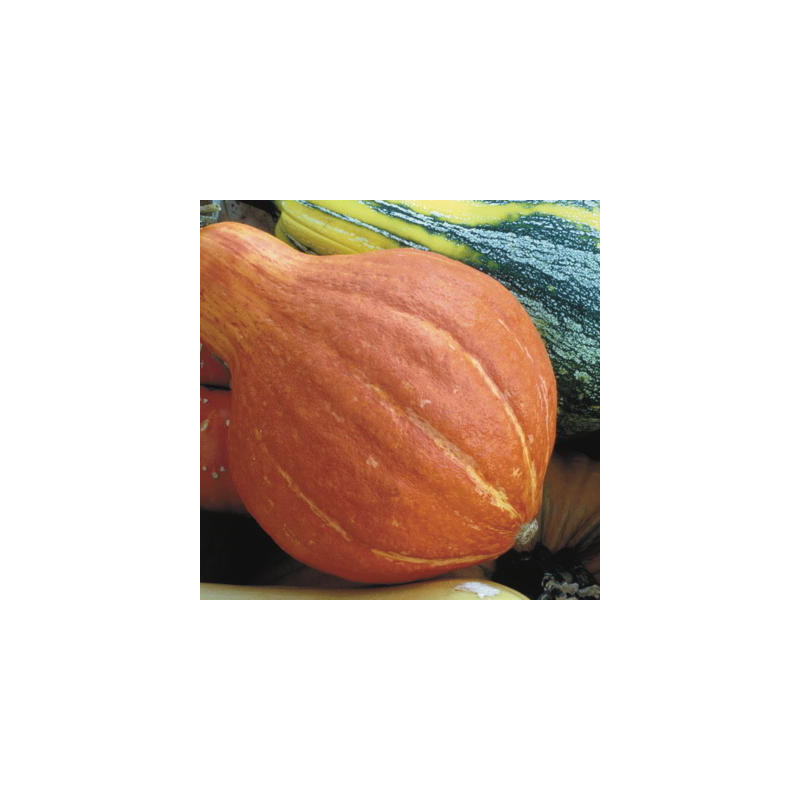Bio heaven biobizz 250 ml