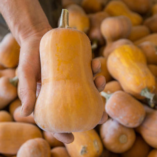 Bio Heaven Biobizz - 500 ml