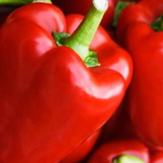 Bouteille jetable CO2 500gr - Easy CO2
