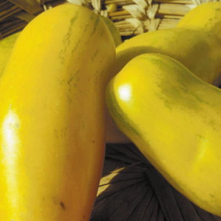 Tube néon 80W Philips - 830 - 6000 lumens