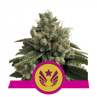 Pro Organic Bloom 500 ml