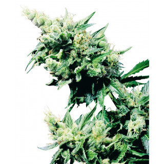 Root Booster Terra Aquatica - 1 litre
