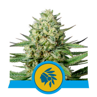 Biogrow Powder Feeding 500 Gr