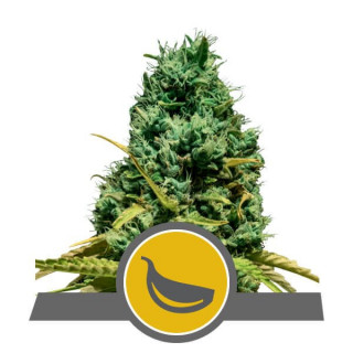 Short Flowering Powder Feeding 1 Kg