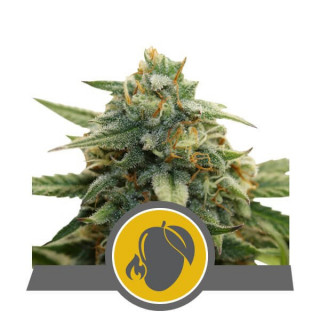 Biobloom Powder Feeding 500 gr