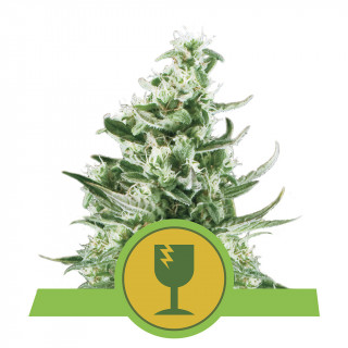 Alga Bloom floraison Plagron - 250 ml