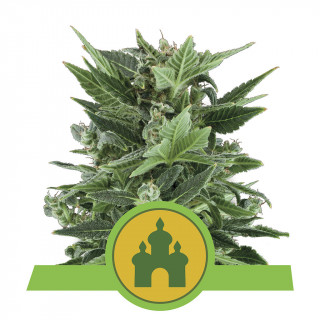 Power roots plagron 500 ml
