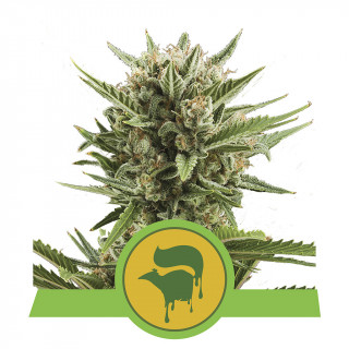 Power roots plagron 5 litres