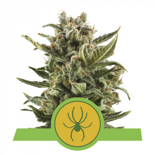 Pure Zym Plagron 250 ml - additif