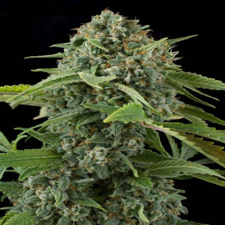 Cocos substrate atami sac 50 litres
