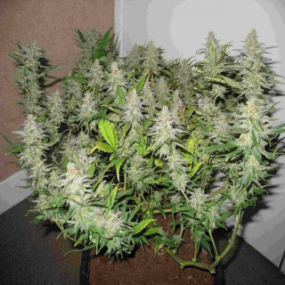 Bouteille CO2 pure airbomz