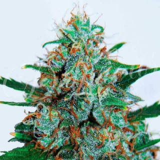 Orchid myst growth technology 300 ml