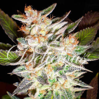Bio nova greenwall supermix 1 litre