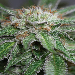Pot textile 50 litres rond - pot on pot