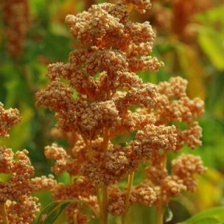 Humidificateur d'air 9 litres cornwall electronics