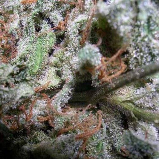 Dark propagator R4 - 90 x 60 x 98 cm secret jardin