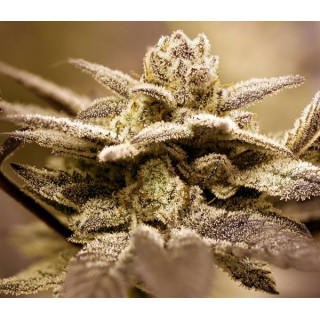 Multizen 500 ml house & garden