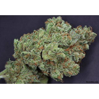 Terreau gold label spécial mix light 40 litres
