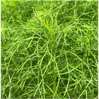 Solution pH up 500 ml GHE