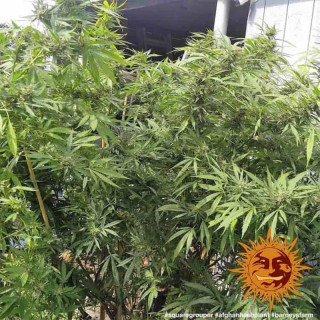 Hydro booster atami 100 ml