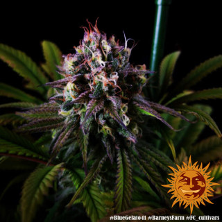 Aptus ALL-IN-ONE pellets 10 litres