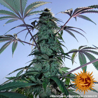 Ampoule 250W super HPS powerplant
