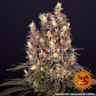 Flange plastique Ø 315 mm Vents