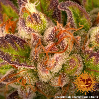 Biobizz régulateur pH bio down 500 ml