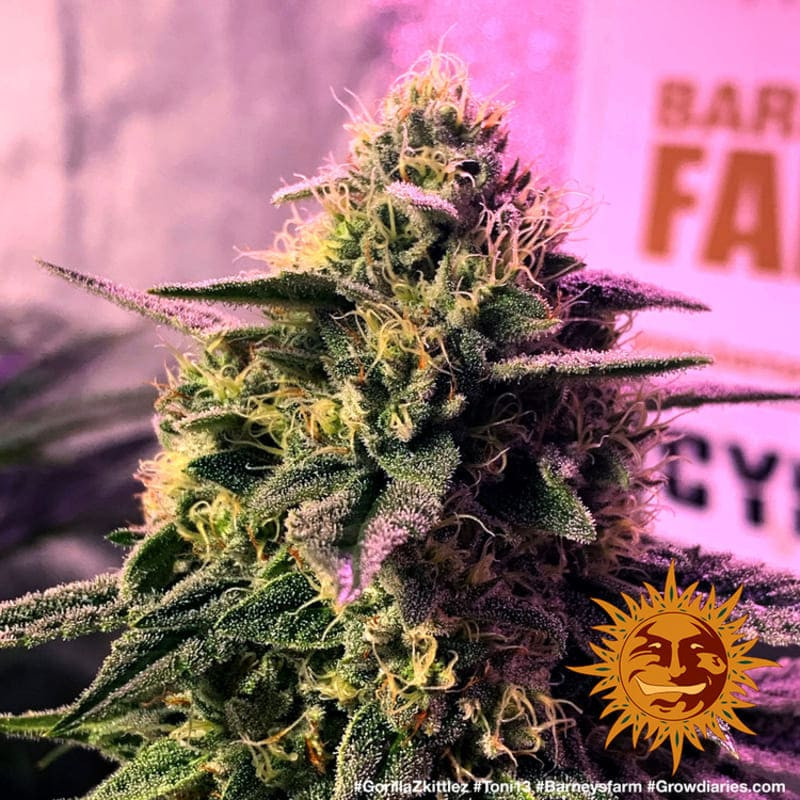 Prise thermostat inversable 220V cornwall electronics