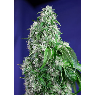 Ventilateur plat carré RAM Eco fan - 300mm